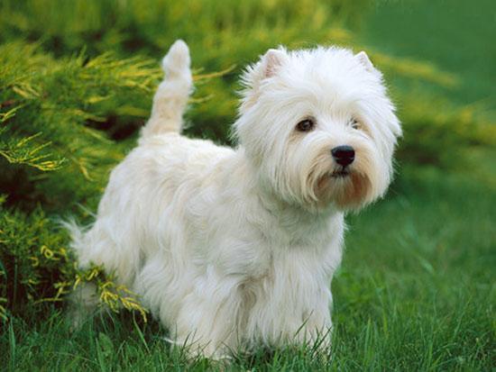 Cani Piccolissimi Da Appartamento: Cani piccolissimi da ...